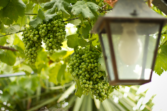 Green bunches of grapes hang from suspended vines. A lamp hangs in the foreground
